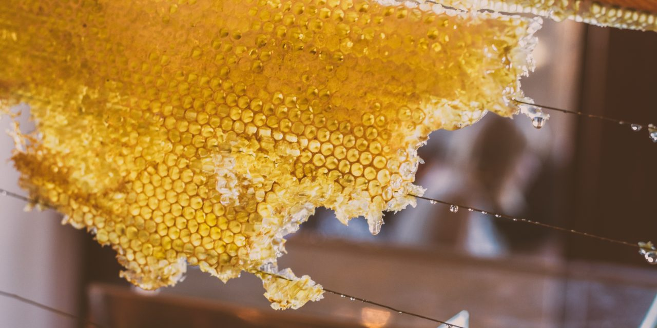 Di umani, di alberi e di api e di fiori… nascosti