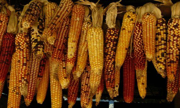 Greta: ovvero del clima a risoluzione vegetale