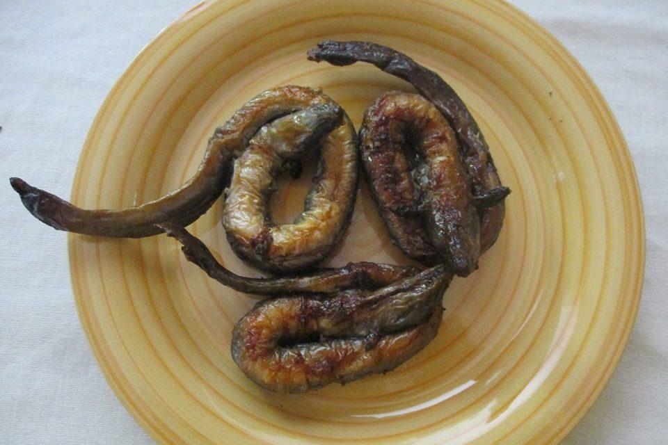 Serpenti in tavola