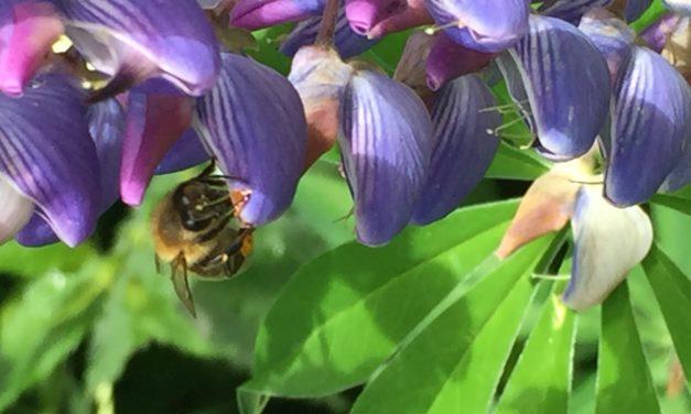 Parliamo dell'olfatto delle api – seconda parte