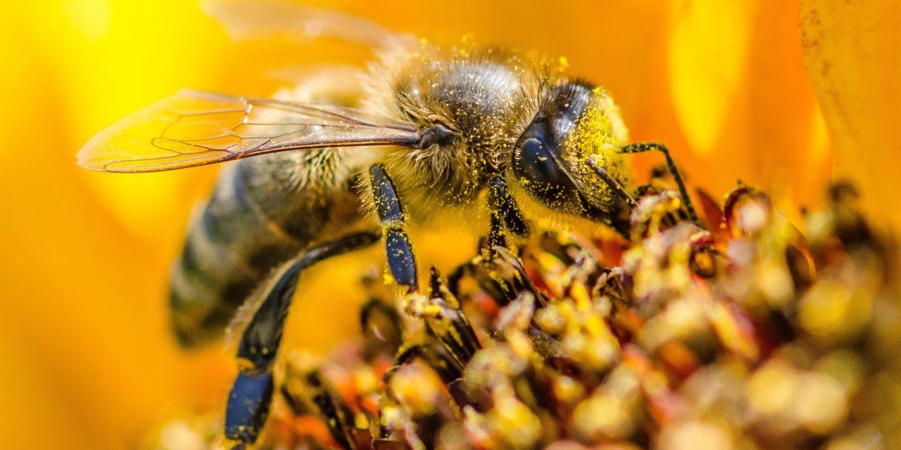 Nella vita per molte cose bisogna avere naso, e le api… ce l'hanno – quarta parte