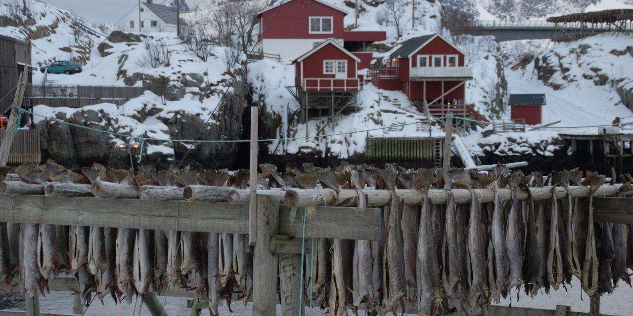Baccalà, il maiale del mare