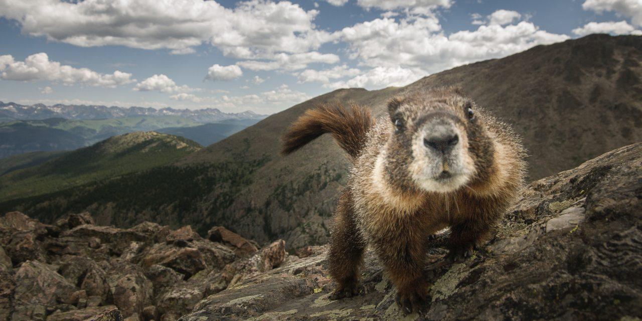 Conservate bene gli alimenti e non mangiate marmotte