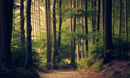Passeggiare nei boschi è un bagno di salute