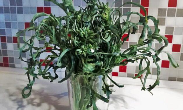 Cavolo verde… spigarello