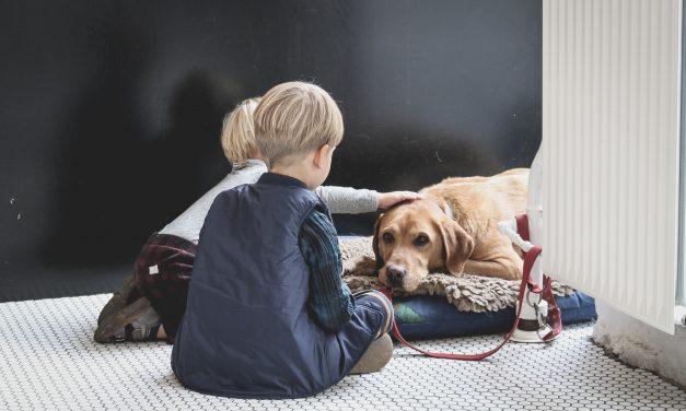 Il Galateo: Bambini ed Animali, come fare?
